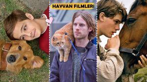 8 Nefis Tavsiye ile: Mutlaka İzlemeniz Gereken En İyi Hayvan Filmleri!